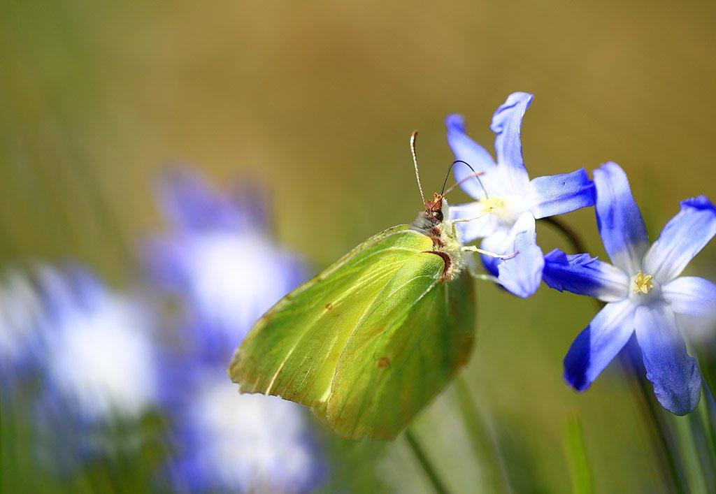 Весна,цветы,бабочка., Виктор Шнайдер