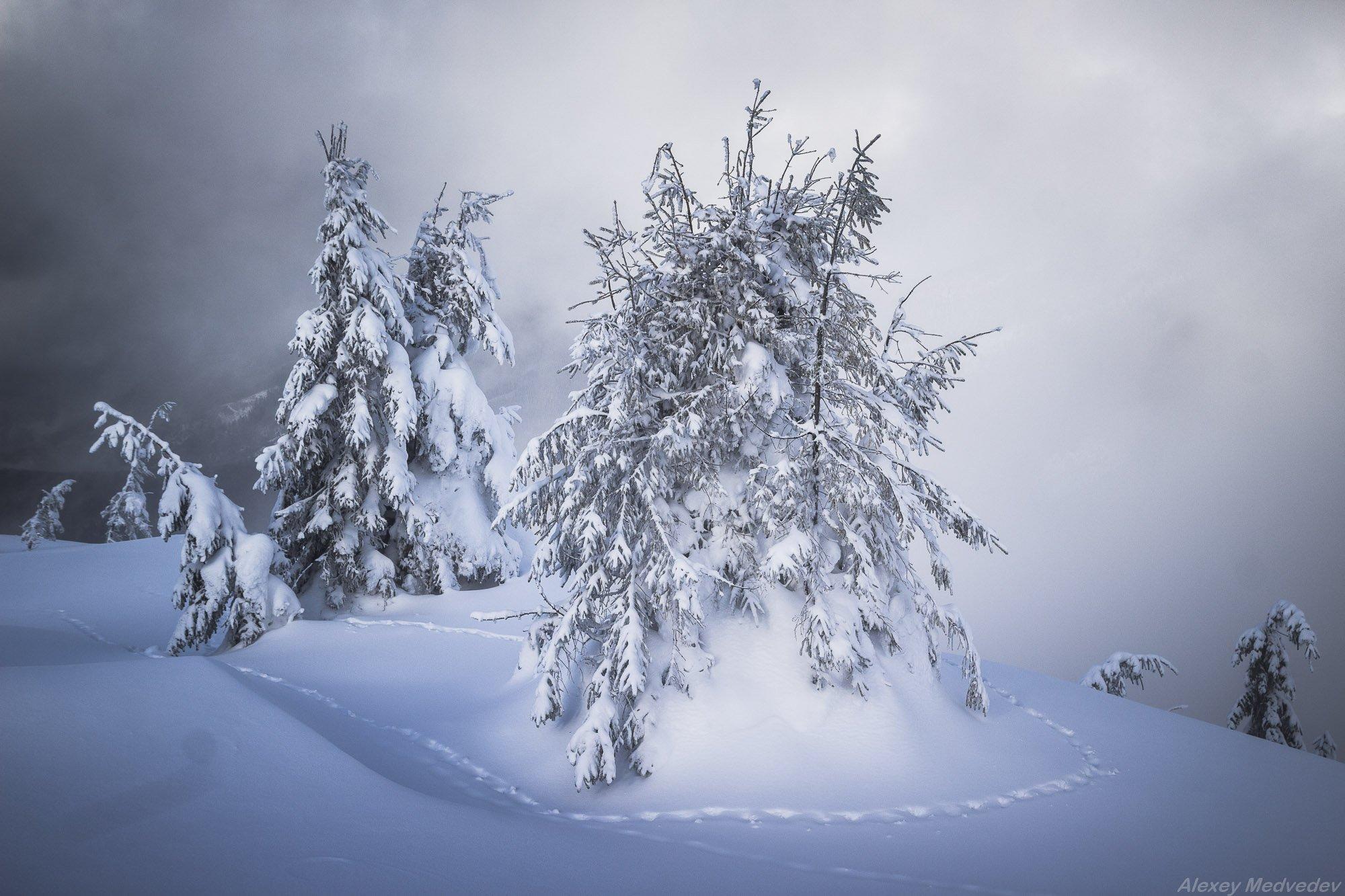 cold, wint, snow, steps, montain, trees, carpathains. , Алексей Медведев