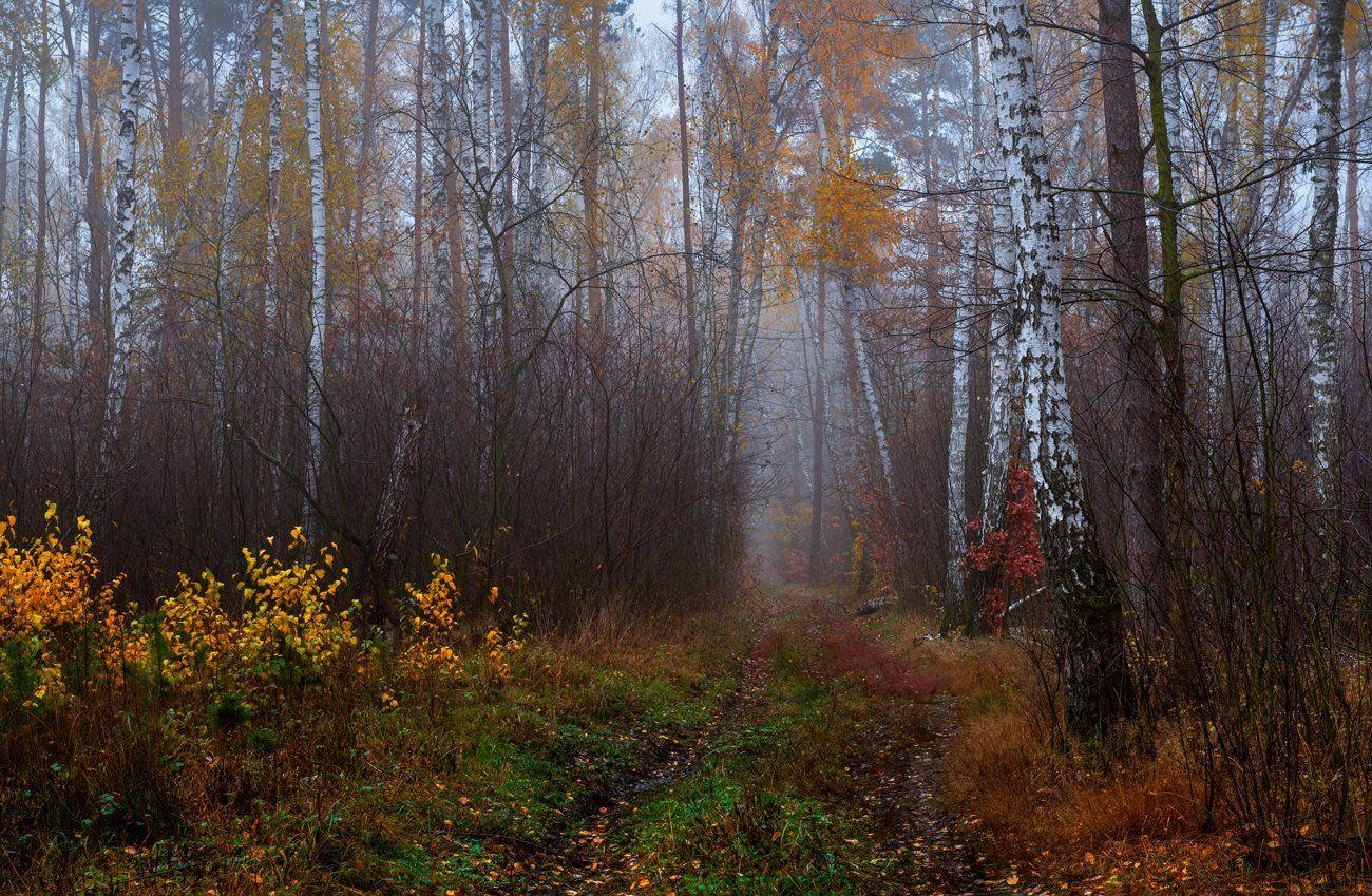лес, осень, ноябрь, туман, тропа, сырость, Галанзовская Оксана
