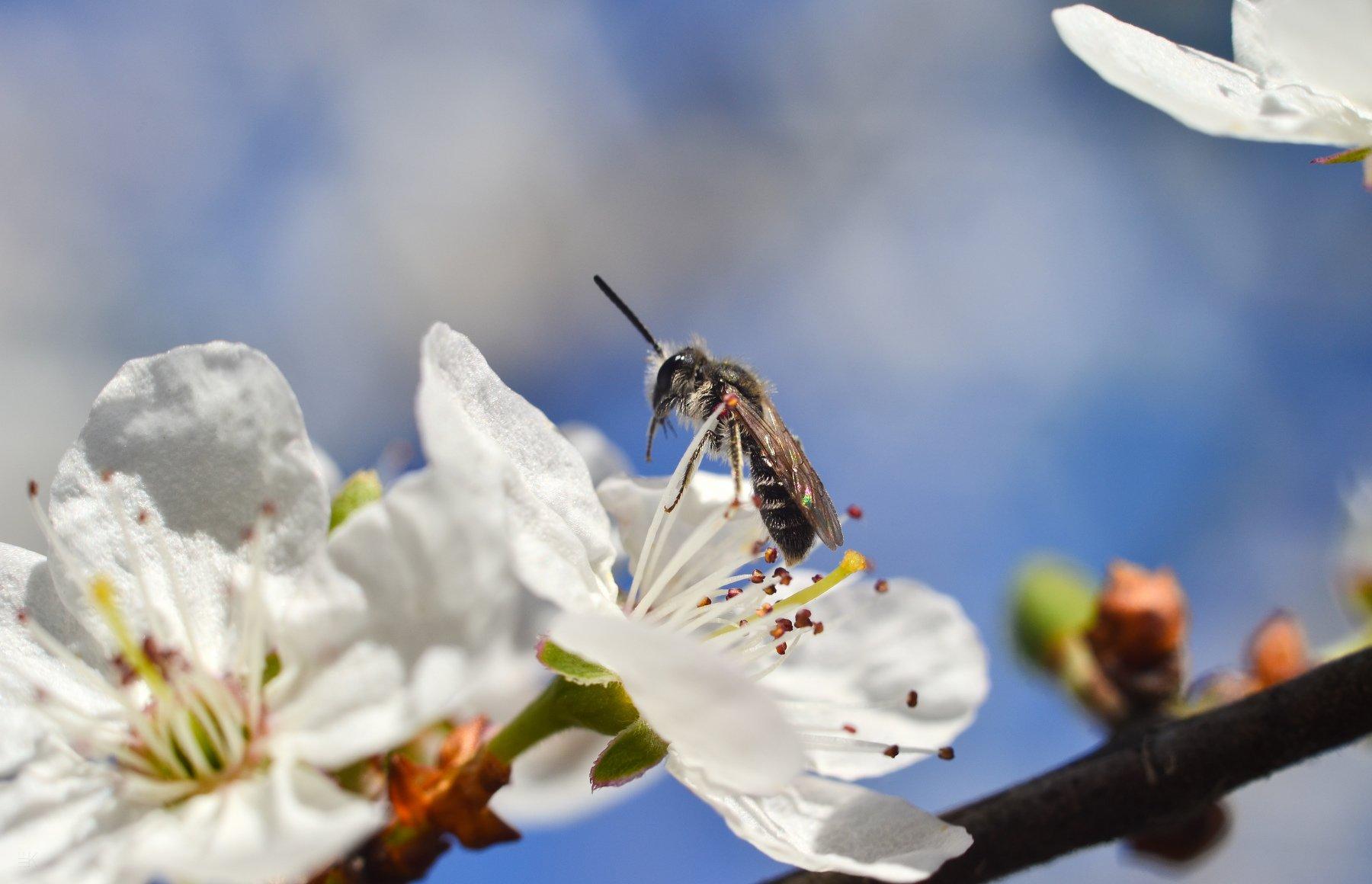 весна, цветы, макро, Елена Шевченко