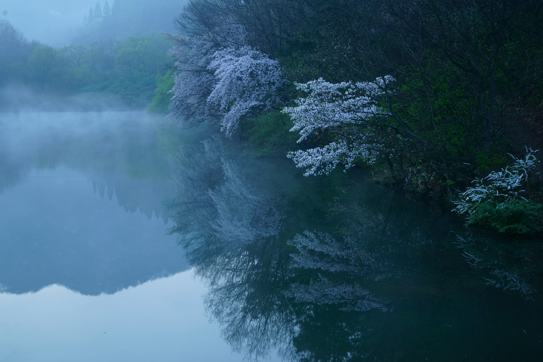 korea,spring,reservoir,morning,cherry blossom,fog,mountain,landscape, Shin