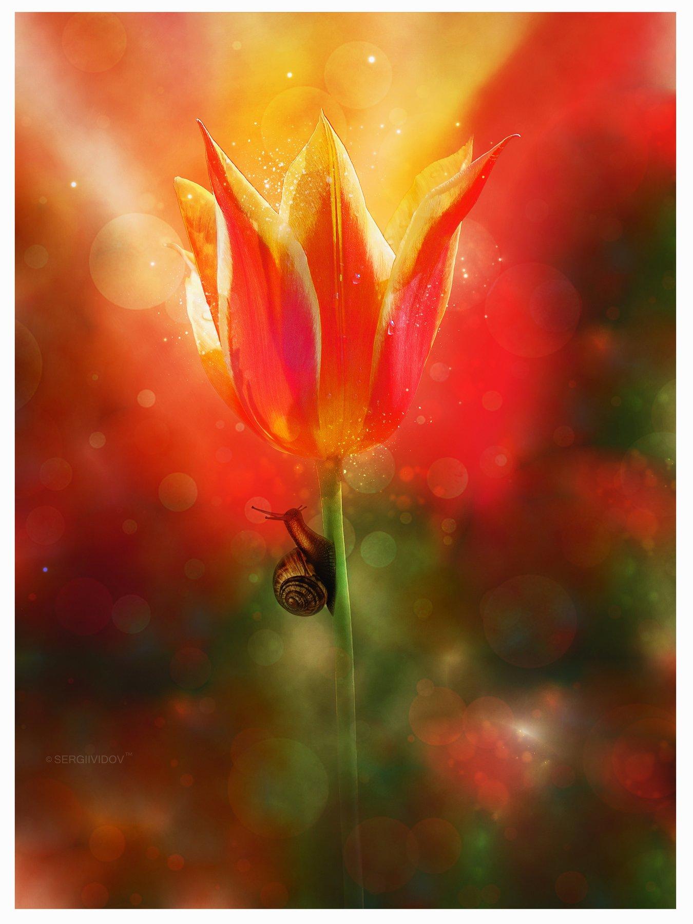 тюльпан, флора, улитка, Sergii Vidov