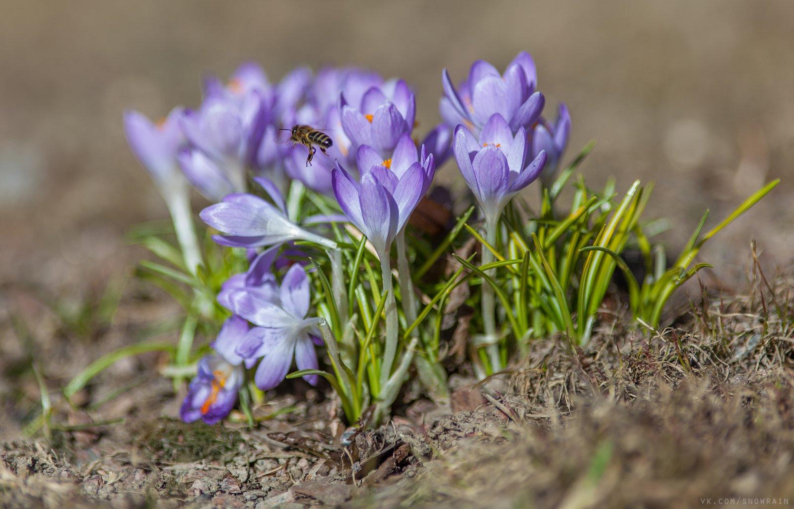 дикая природа, природа, лес, nature, wildlife, цветы, flower, wildlifephoto, весна, spring, Snowrain