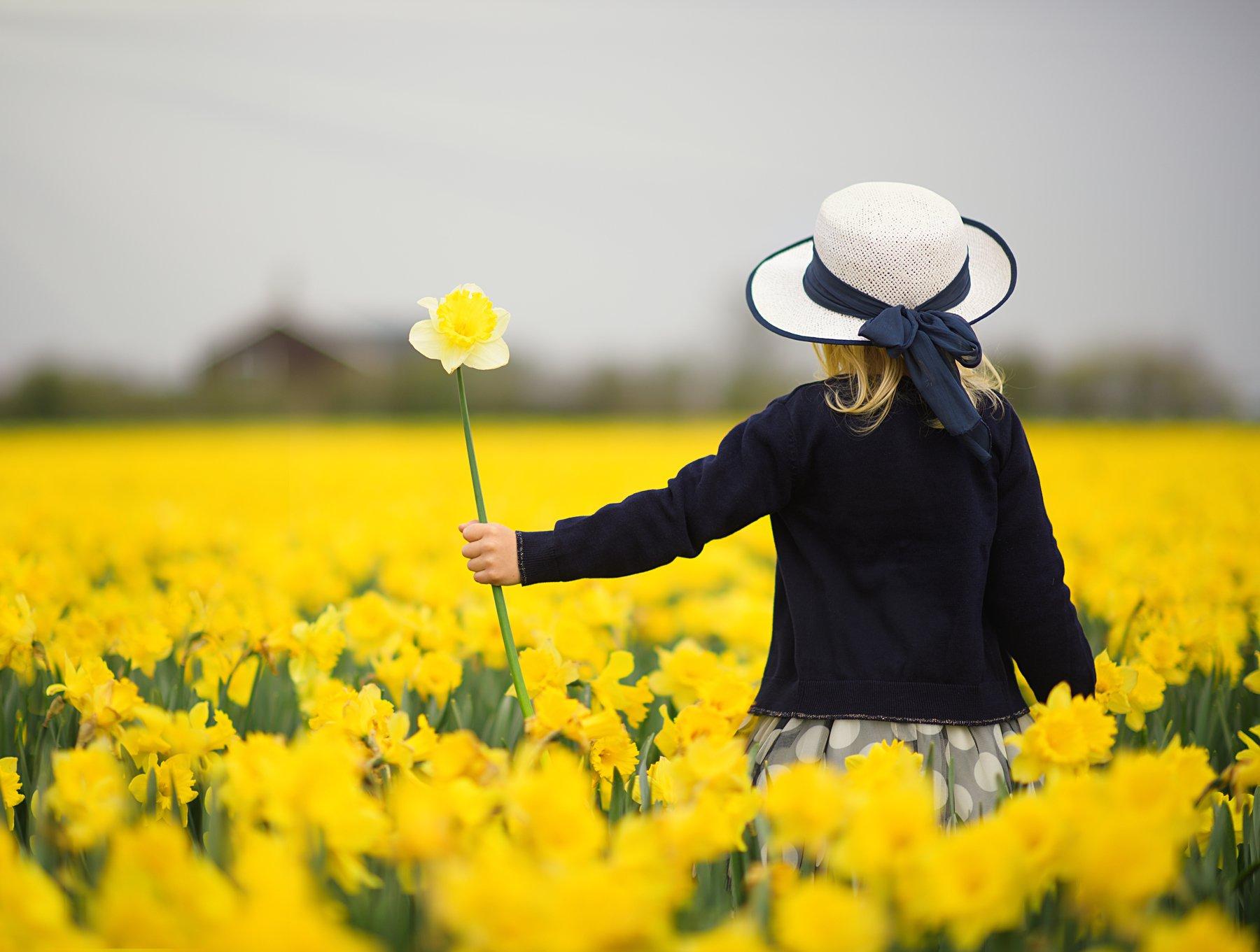 spring нарциссы голландия поле цветов весна frühling holland blumen, Elena Hildbrand