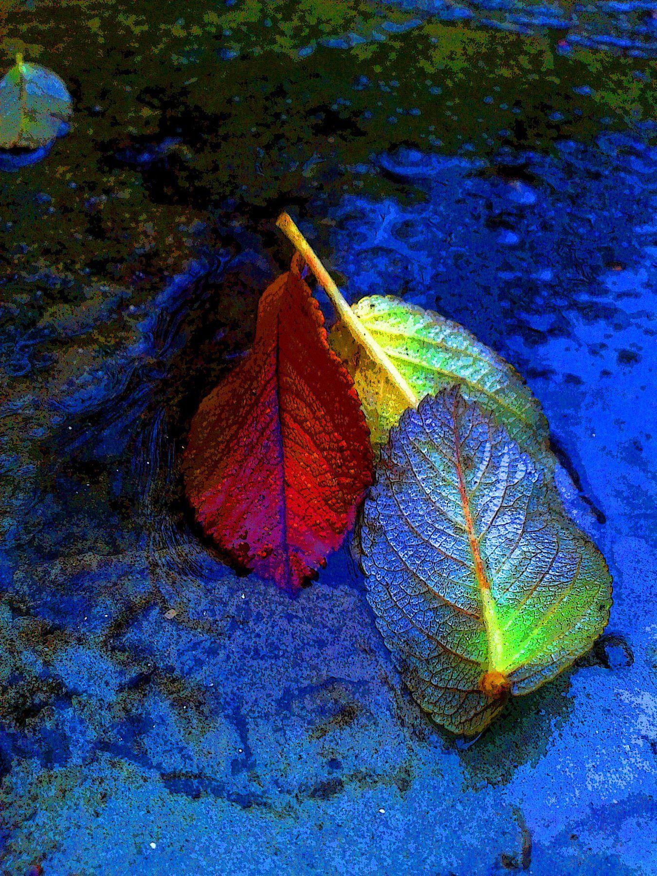 вода, листья, осень, Влада Андрюнина