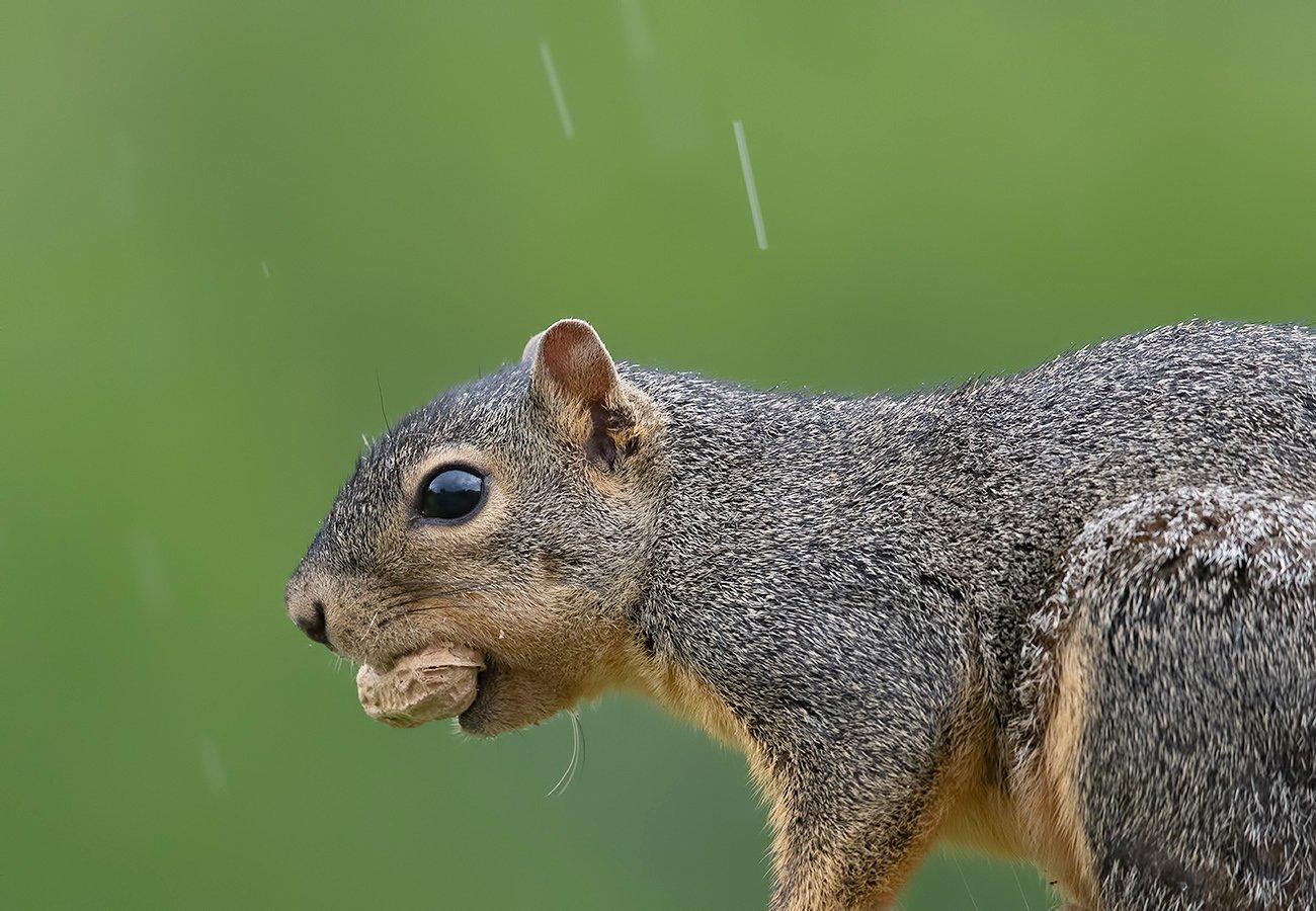 белка, squirrel, Elizabeth E