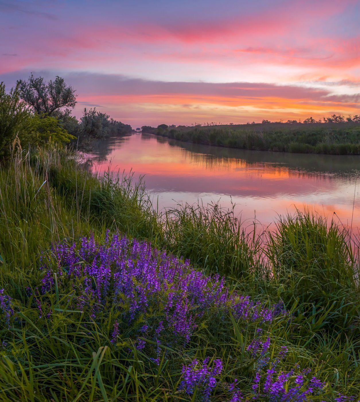 pentax645z, pentaxrussia, pentax, ставропольский край,  путешествие, фотоальбом, цветы, природа, рассвет, облака, горошек, луг, трава, канал, река,, Лашков Фёдор