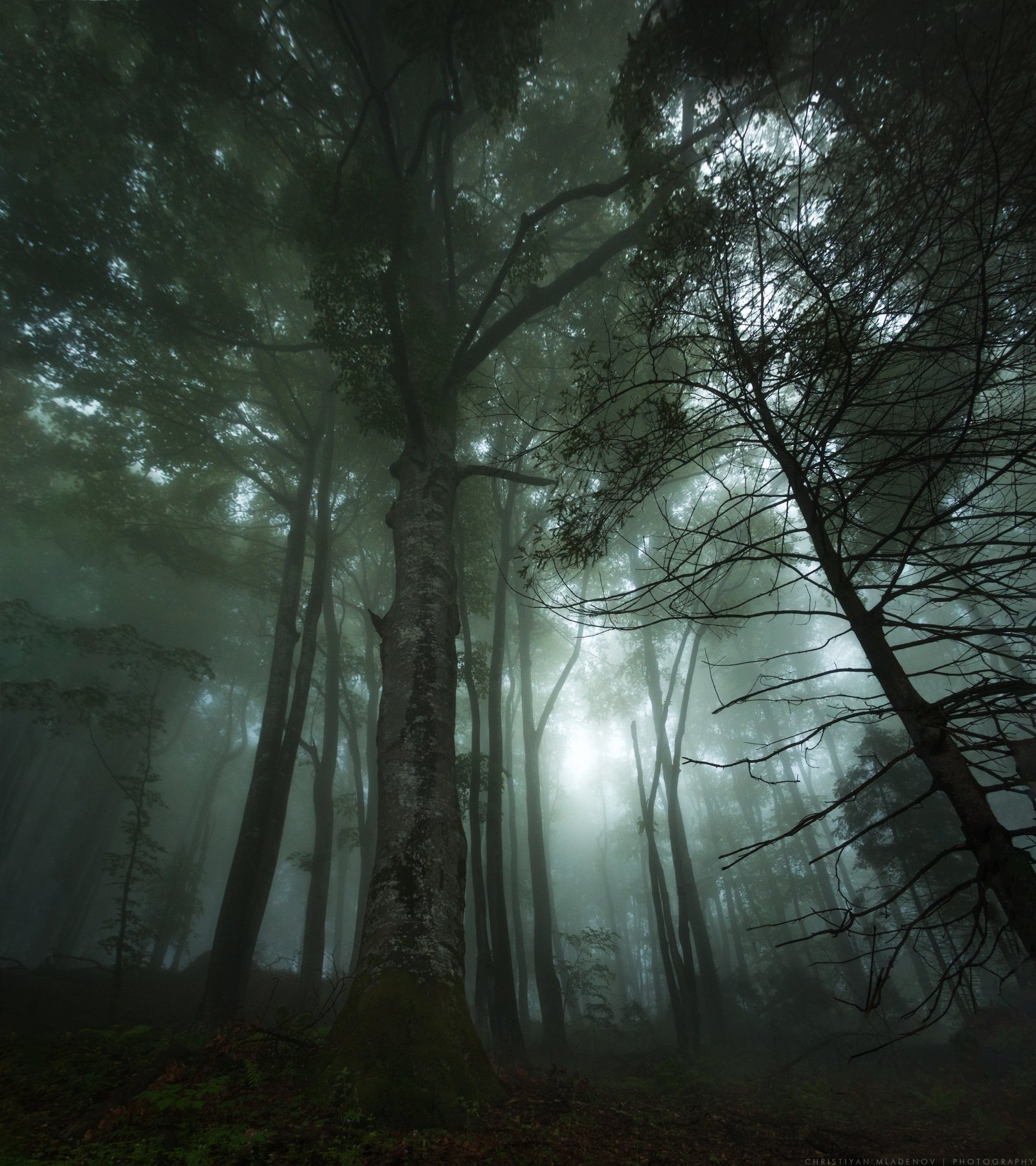 landscape, forest, tree, wide angle, fog, mist, mountain, woods, spring, bulgaria, nature, green, plant, weed, leafs, dream, panorama, woodland, gora, mountain,, Кристиян Младенов