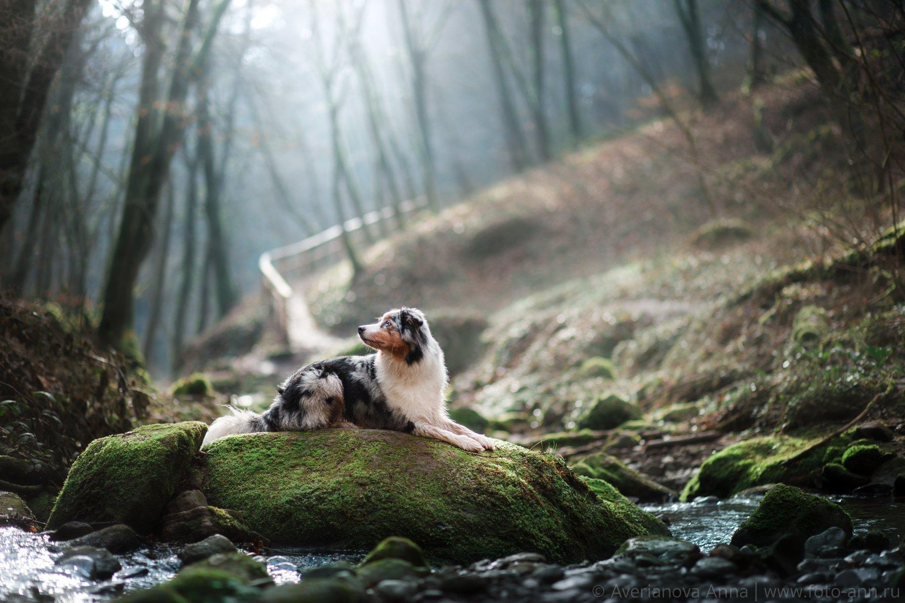 собака, природа, лес, Анна Аверьянова