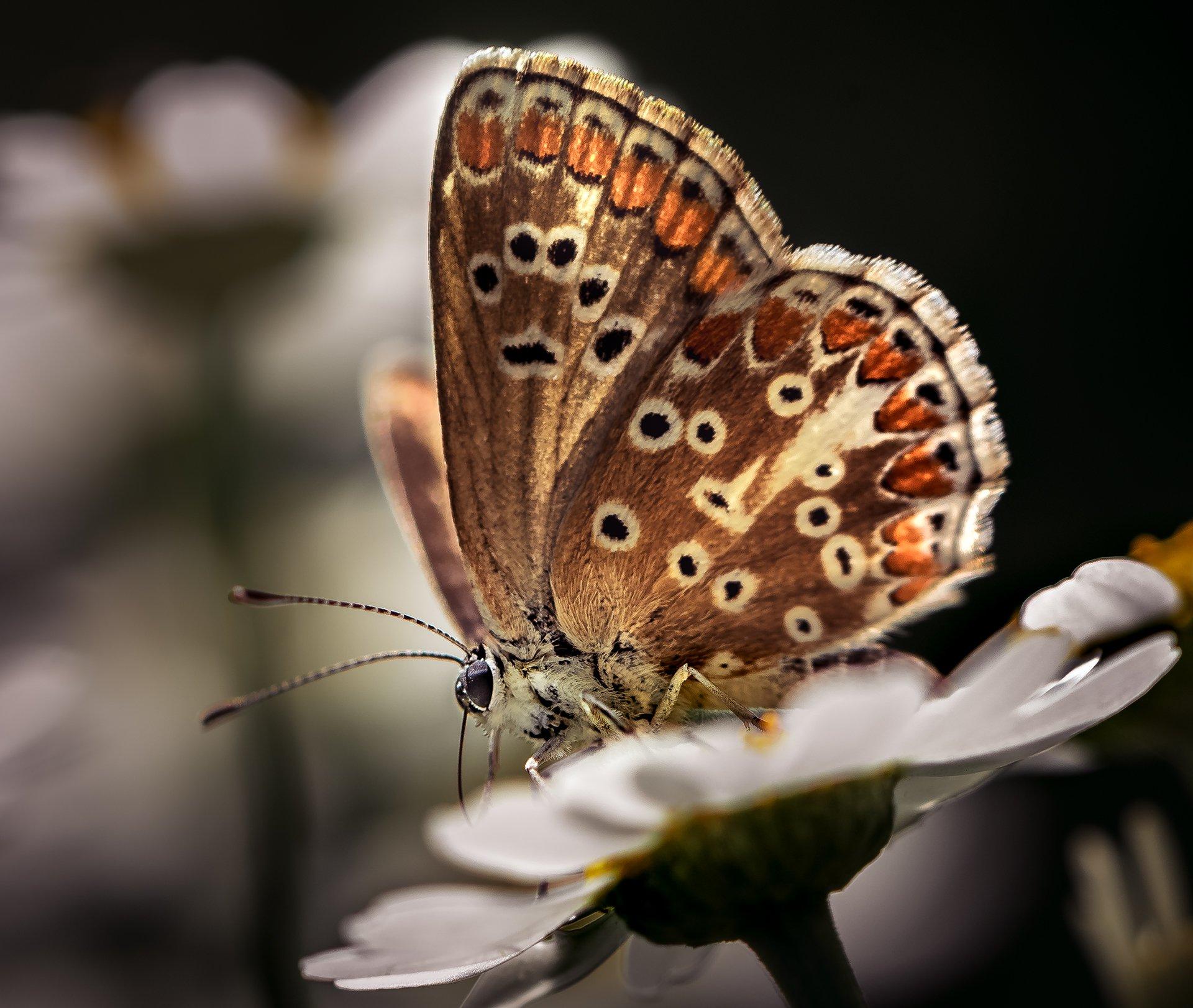 природа, макро, насекомое, бабочка, Неля Рачкова