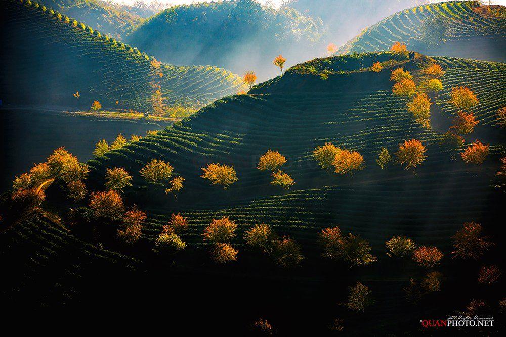 quanphoto, landscape, nature, sunlight, hill, tea, mountains, peach, trees, colorful, vietnam, quanphoto