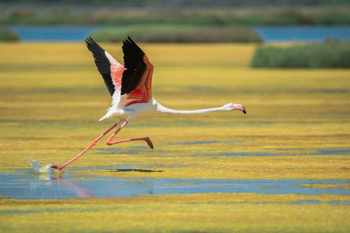flamingo, Filip Stefaniak