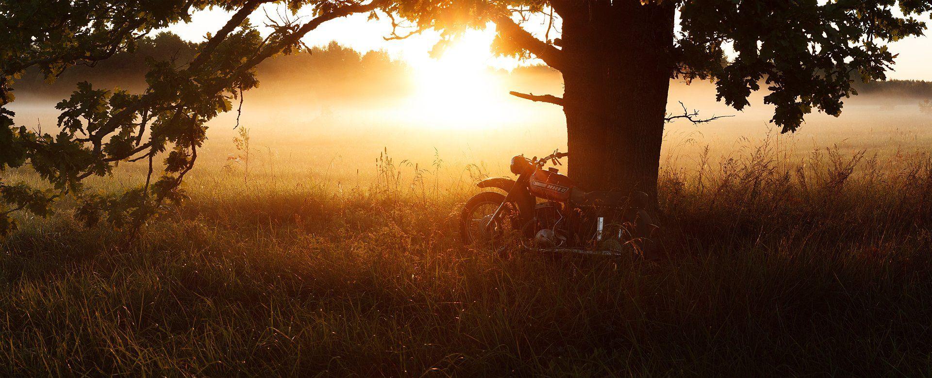 утро, туман, дуб, иж, брянск, алексей платонов, пейзаж,old grandfather izh, Платонов Алексей