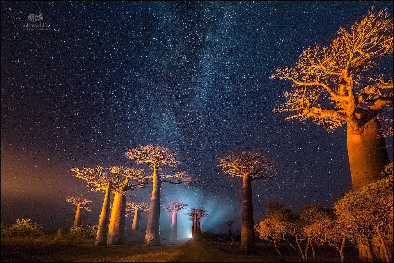 Мадагаскар, баобабы, ночь, фототур, Mikhail Vorobyev
