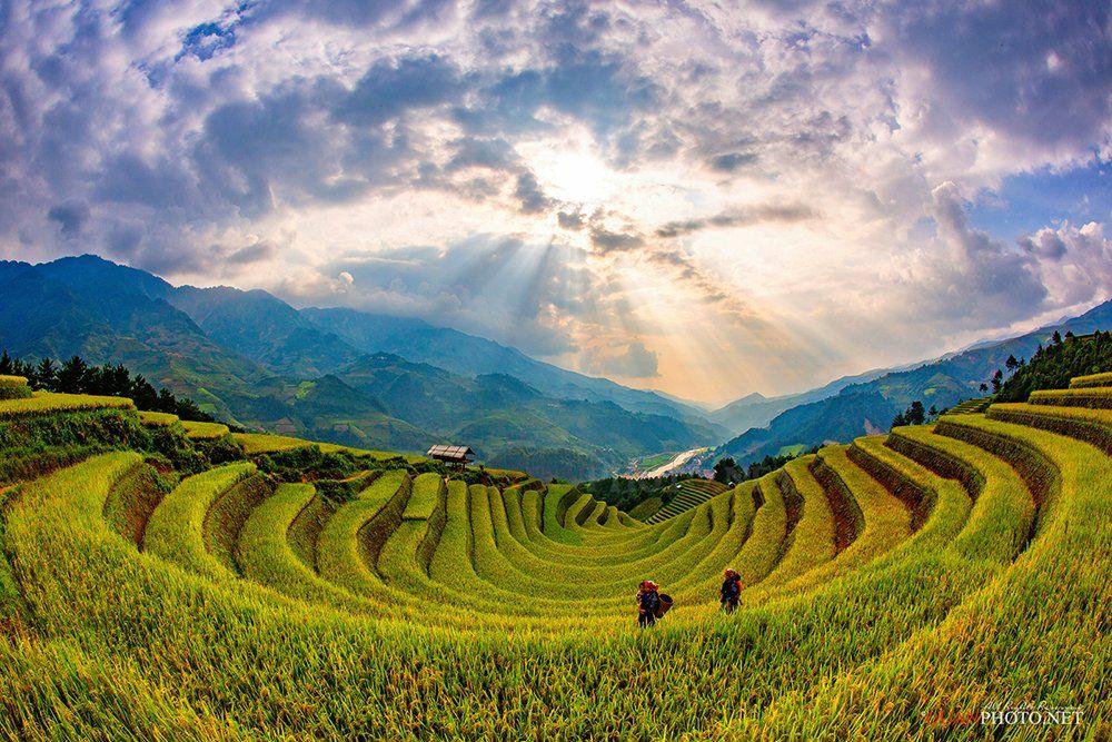 quanphoto, landscape, sunset, sundown, rice, valley, terraces, mountains, clouds, farmland, agriculture, vietnam, asia, golden, harvest, quanphoto