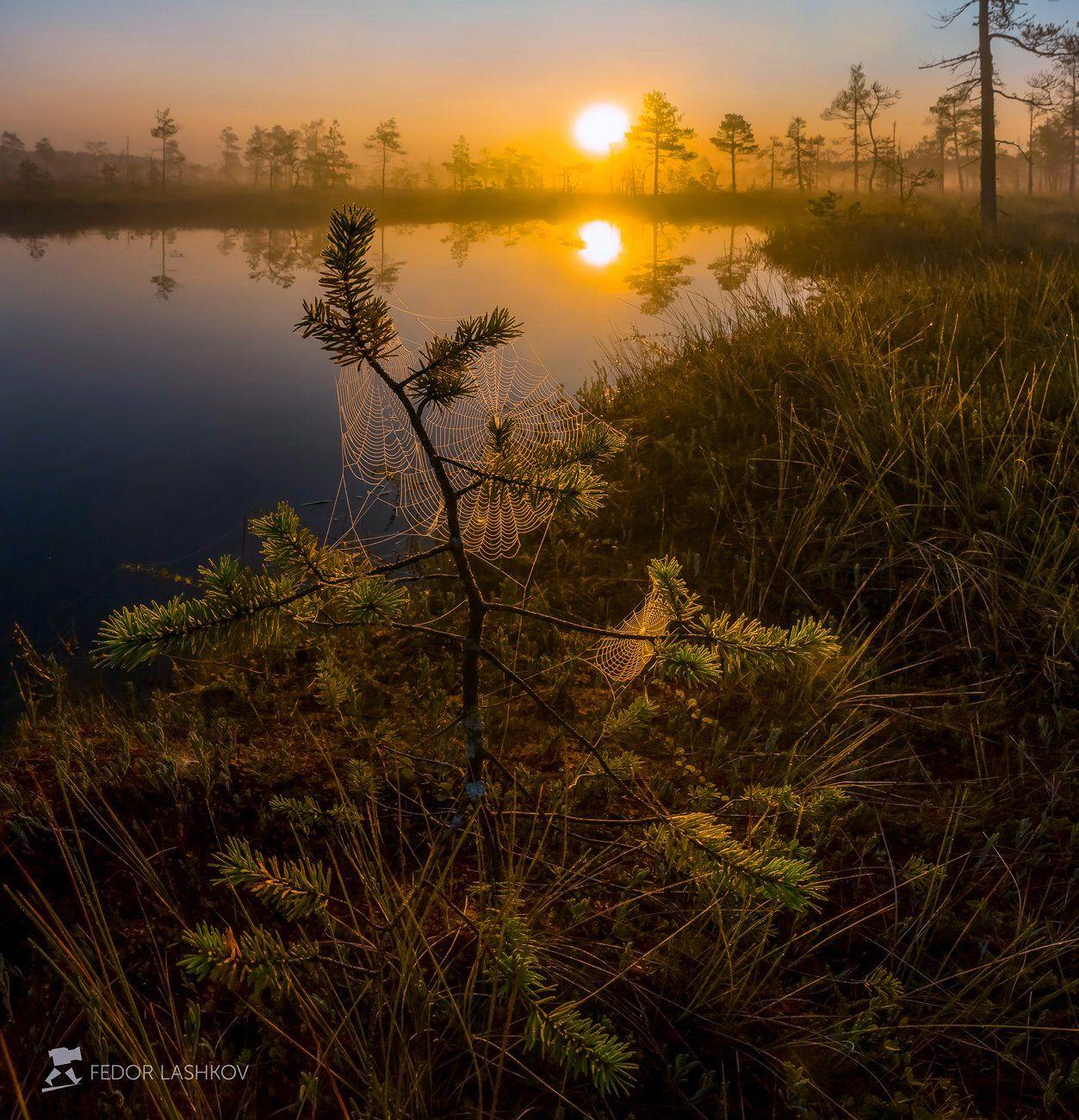 фототур, ленинградская область, сосна, дерево, озеро, рассвет, солнце, туман, паутина,, Лашков Фёдор