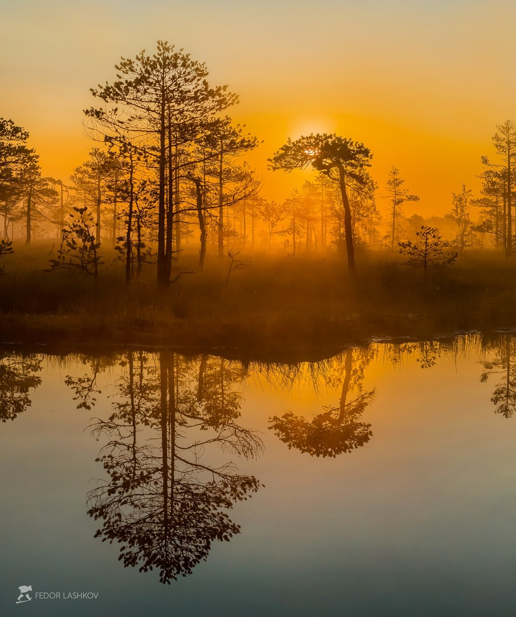 фототур, ленинградская область, деревья, сосна, болото, рассвет, туман, лето, солнце, оранжевый, отражение, озеро., Лашков Фёдор