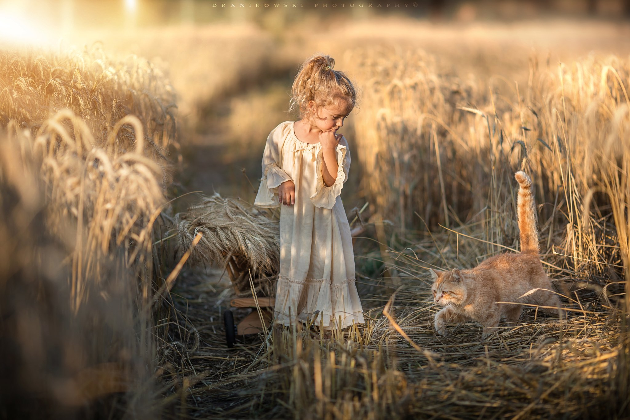 сбор урожая с кошкой harvest cat little girl grain sunlight marie dranikowski 135mm cute dziewczynka, Radoslaw Dranikowski