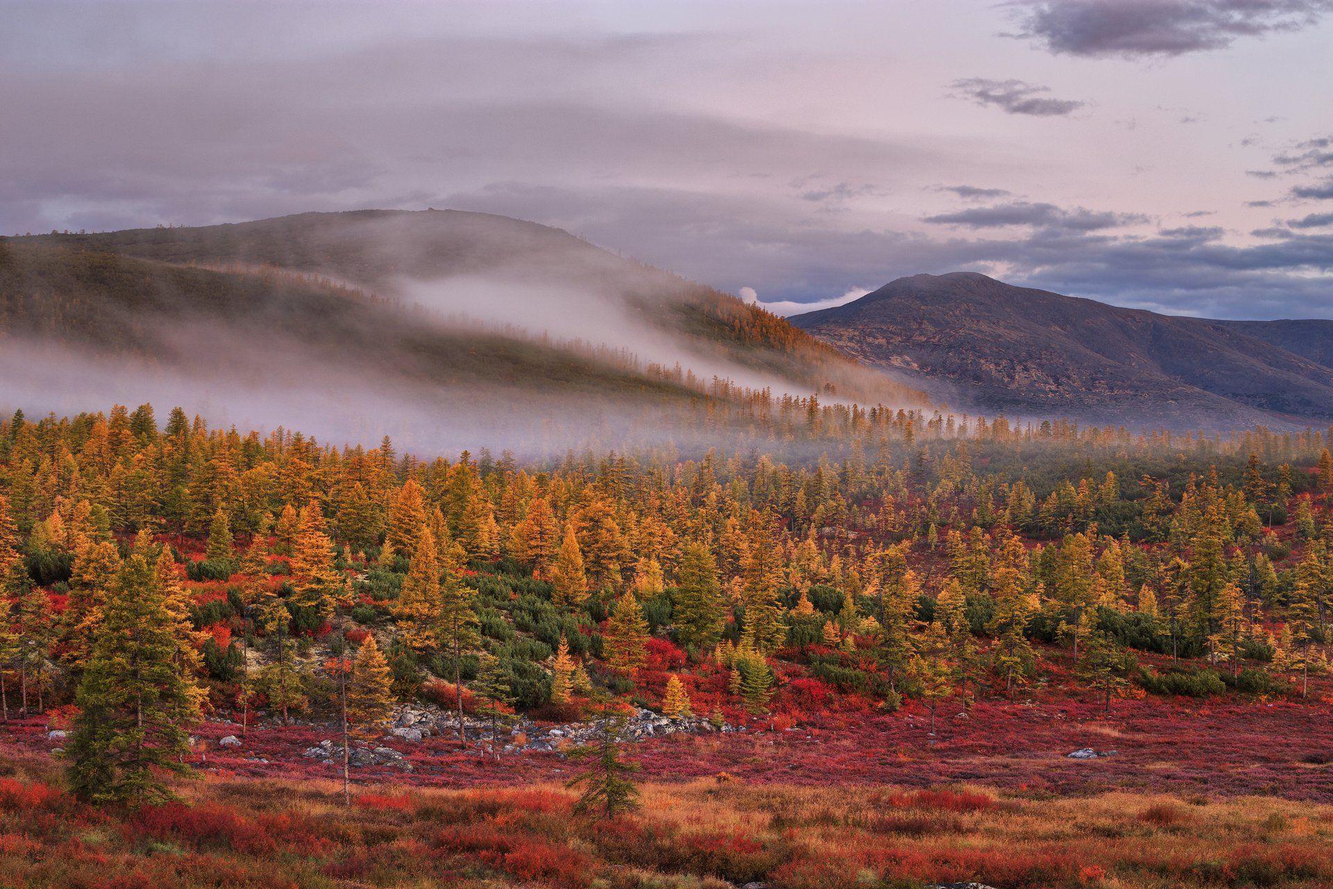 2018, россия, колыма, утро, краски, осень, горы, лиственницы, туман, тучи, деревья, Лукьяненко Денис
