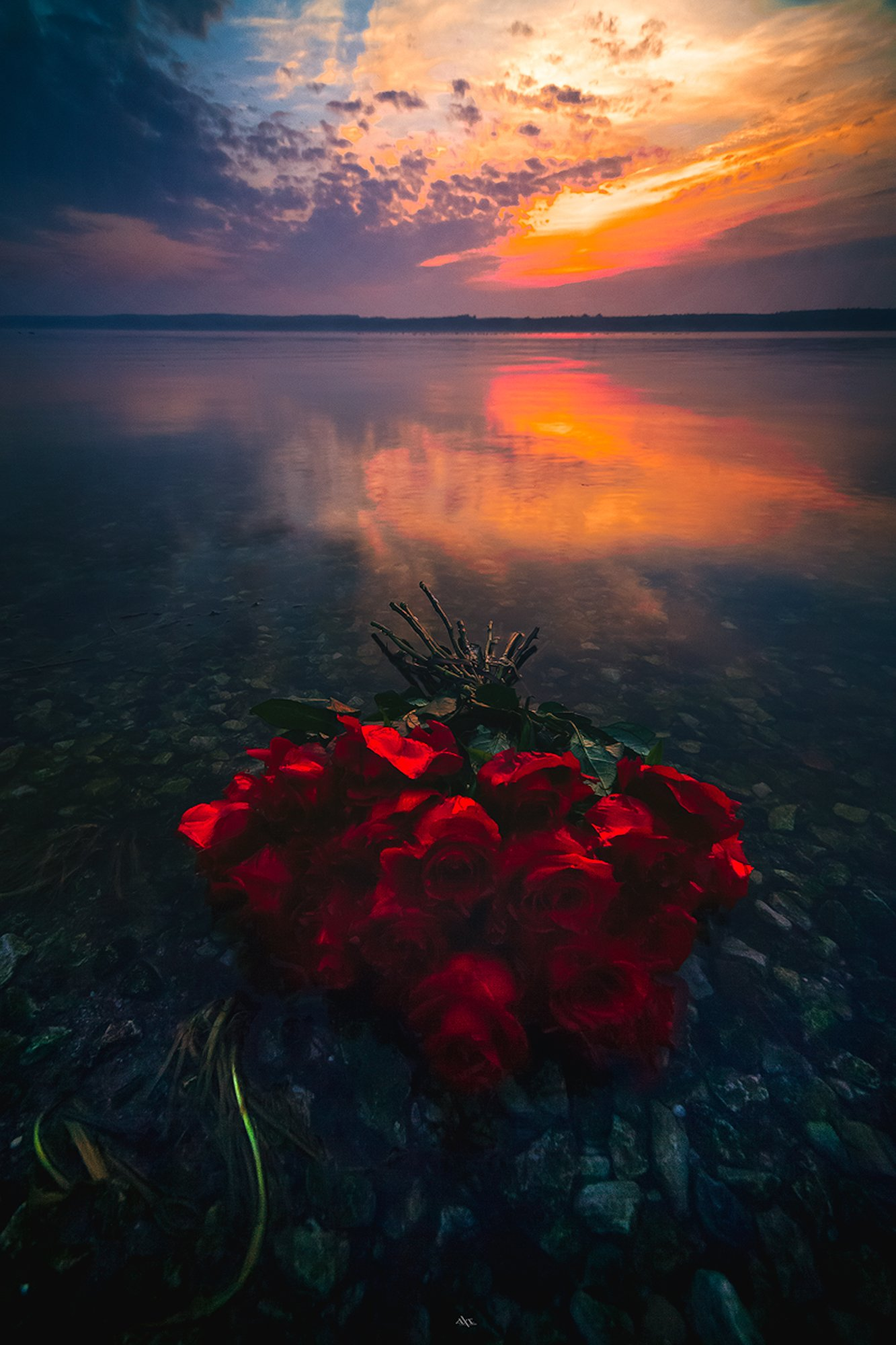 landscape, sunset, curonian lagoon, lithuania, colors, reflection, roses, Руслан Болгов (Axe)