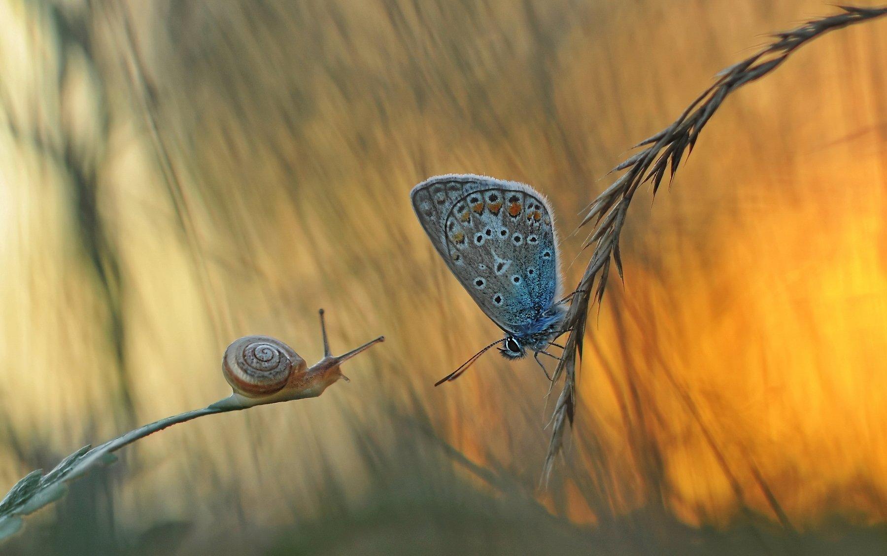 закат, бабочка, природа, улитка, Александр Гвоздь