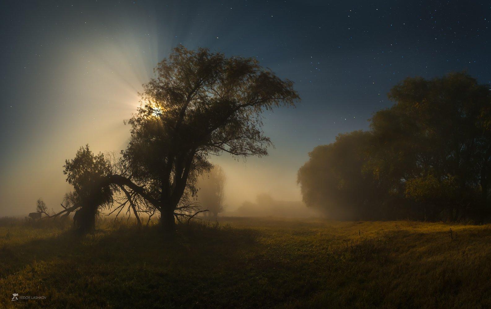 pentax645z, pentax, астраханская область, ночь, полнолунье, луна, лучи, туман, ива, дерево, деревья, магия, свет,, Лашков Фёдор