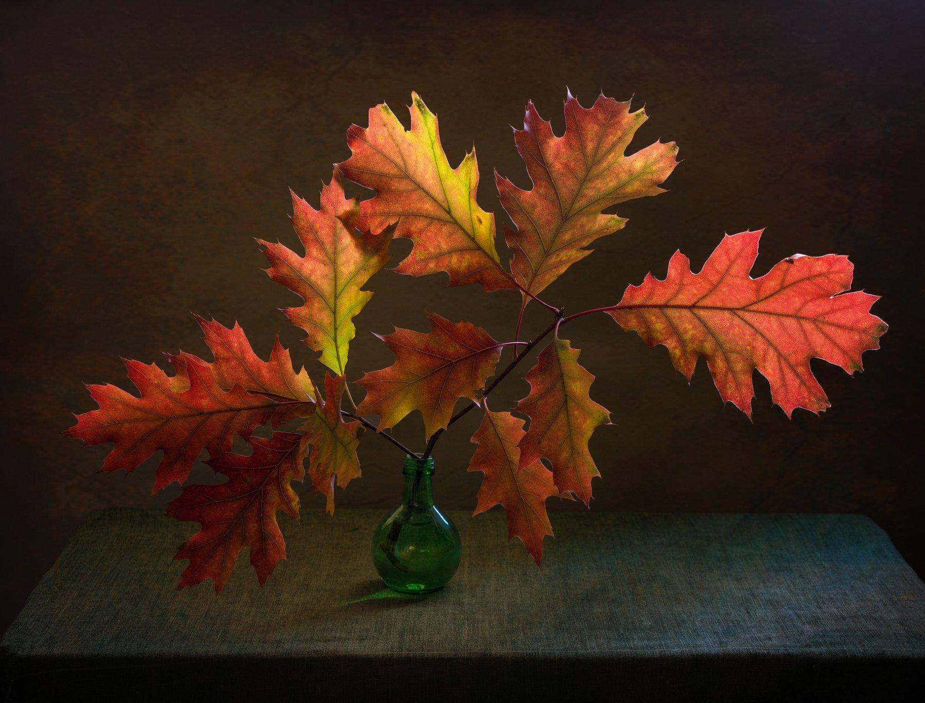 still life, натюрморт,    природа,  винтаж,  букет, осень, осенние листья, минимализм, дубовая ветка, дубовые листья, осенние краски, Михаил MSH