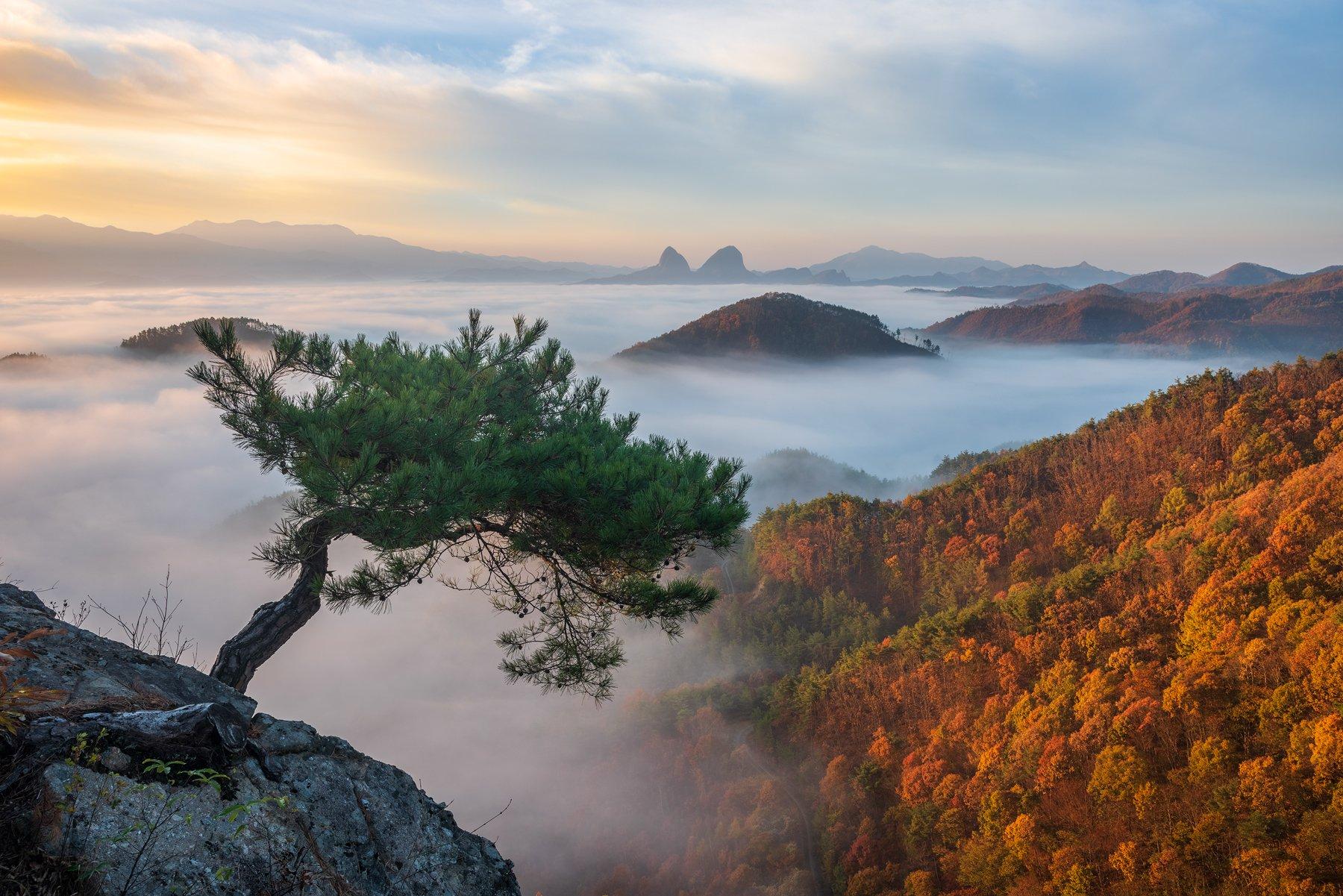 mountains, foliage, bonsai, pine, rock, autumn, 류재윤