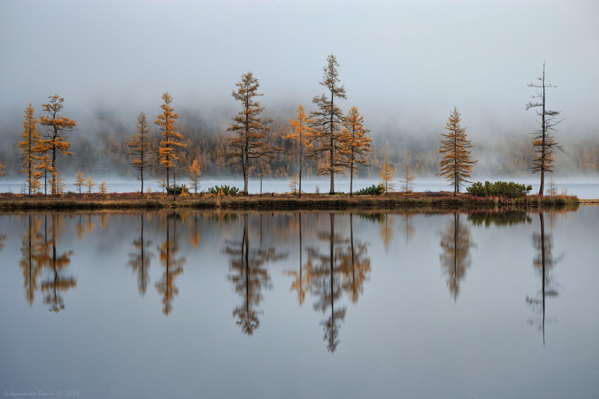 2018, россия, колыма, утро, осень, горы, лиственницы, деревья, туман, отражение, Лукьяненко Денис