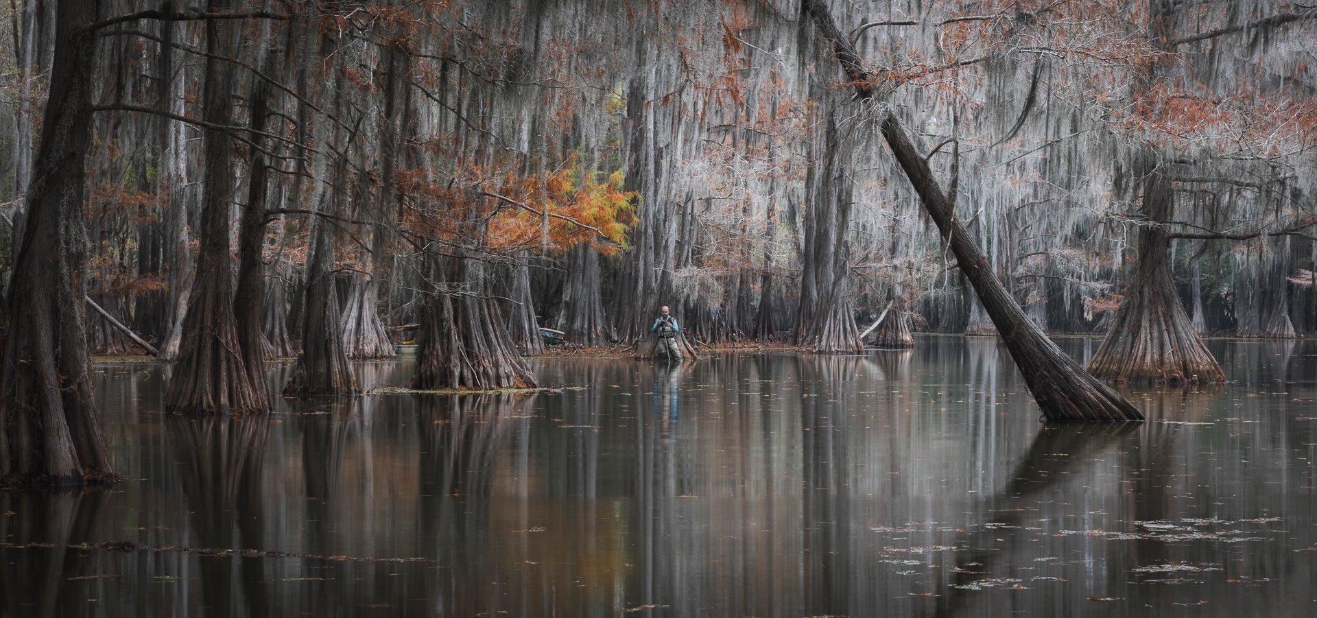 кипарисы, осень, болото, америка, Marina Malikova