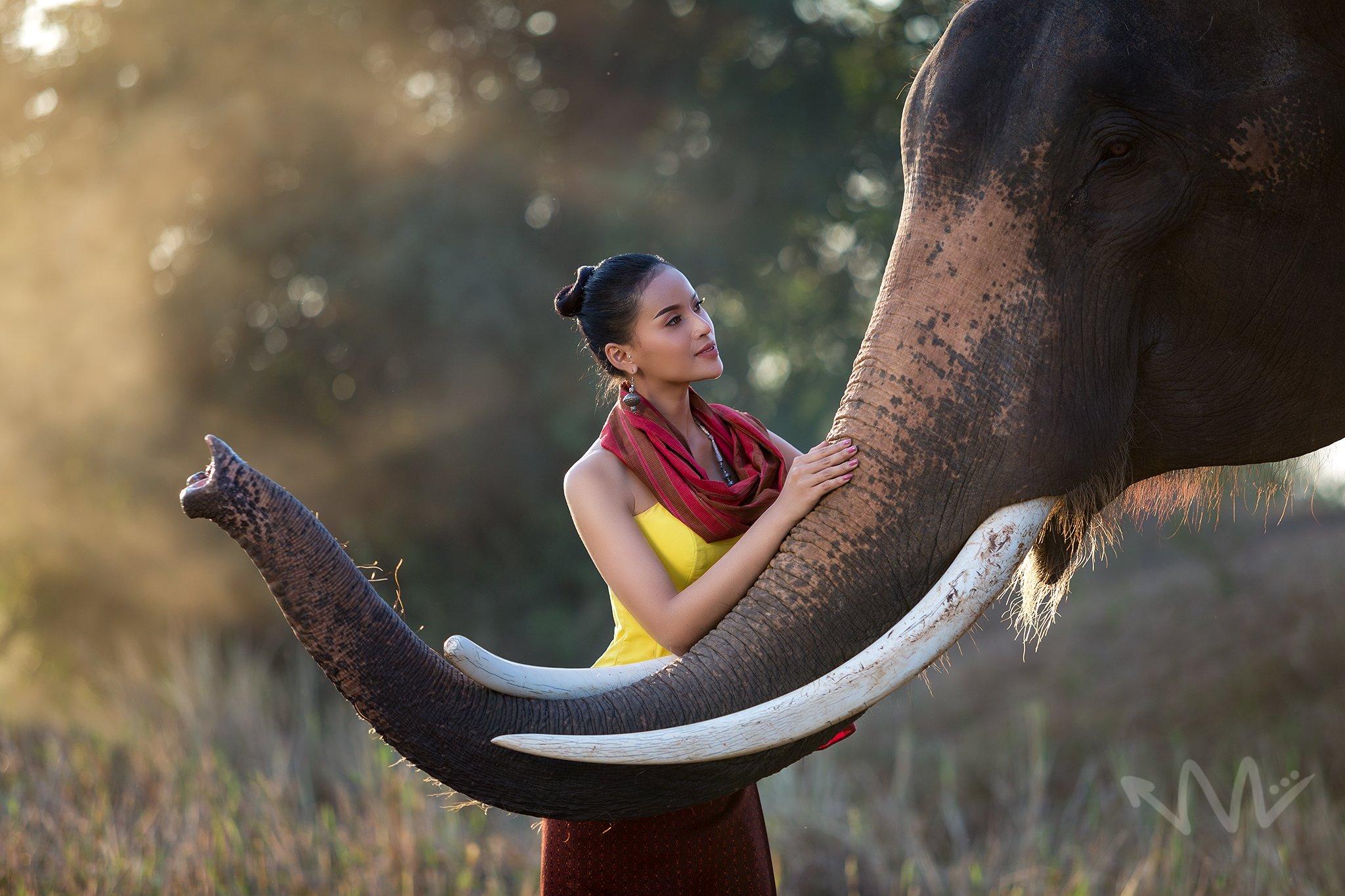 elephant, portrait, thailand, wildlife, , SUTIPOND SOMNAM