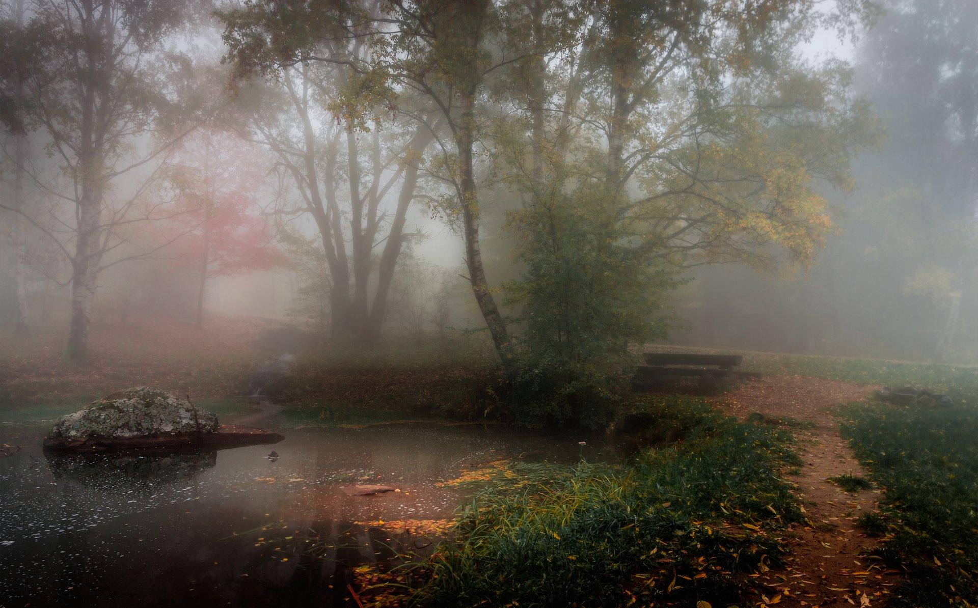 landscape, nature, scenery, forest, wood, mist, misty, fog, foggy, mountain, vitosha, bulgaria, туман, лес, Александър Александров