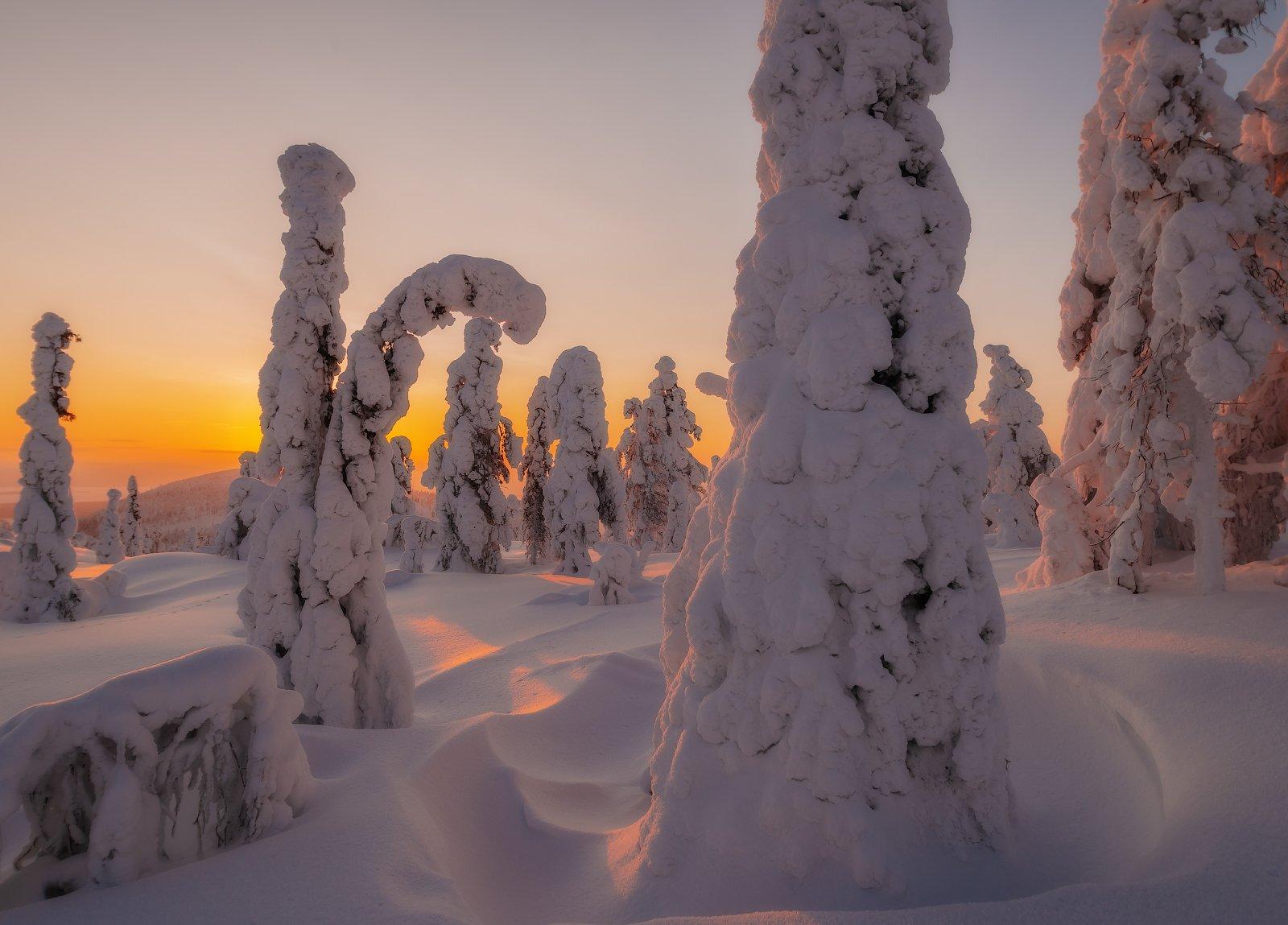 Припорошен в инее мирно дремлет лес