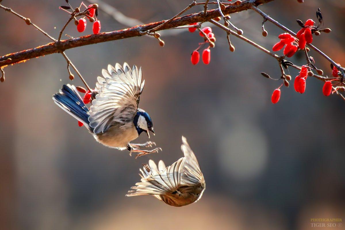 tit birds winter fly great_tit nature animals Korea, 서 맹호