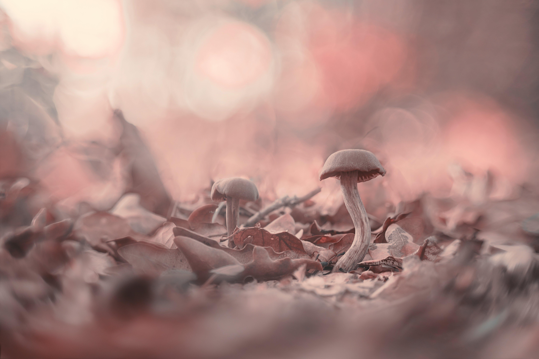 macro, mushroom, forest, nature, small, autumn, Antonio Bernardino