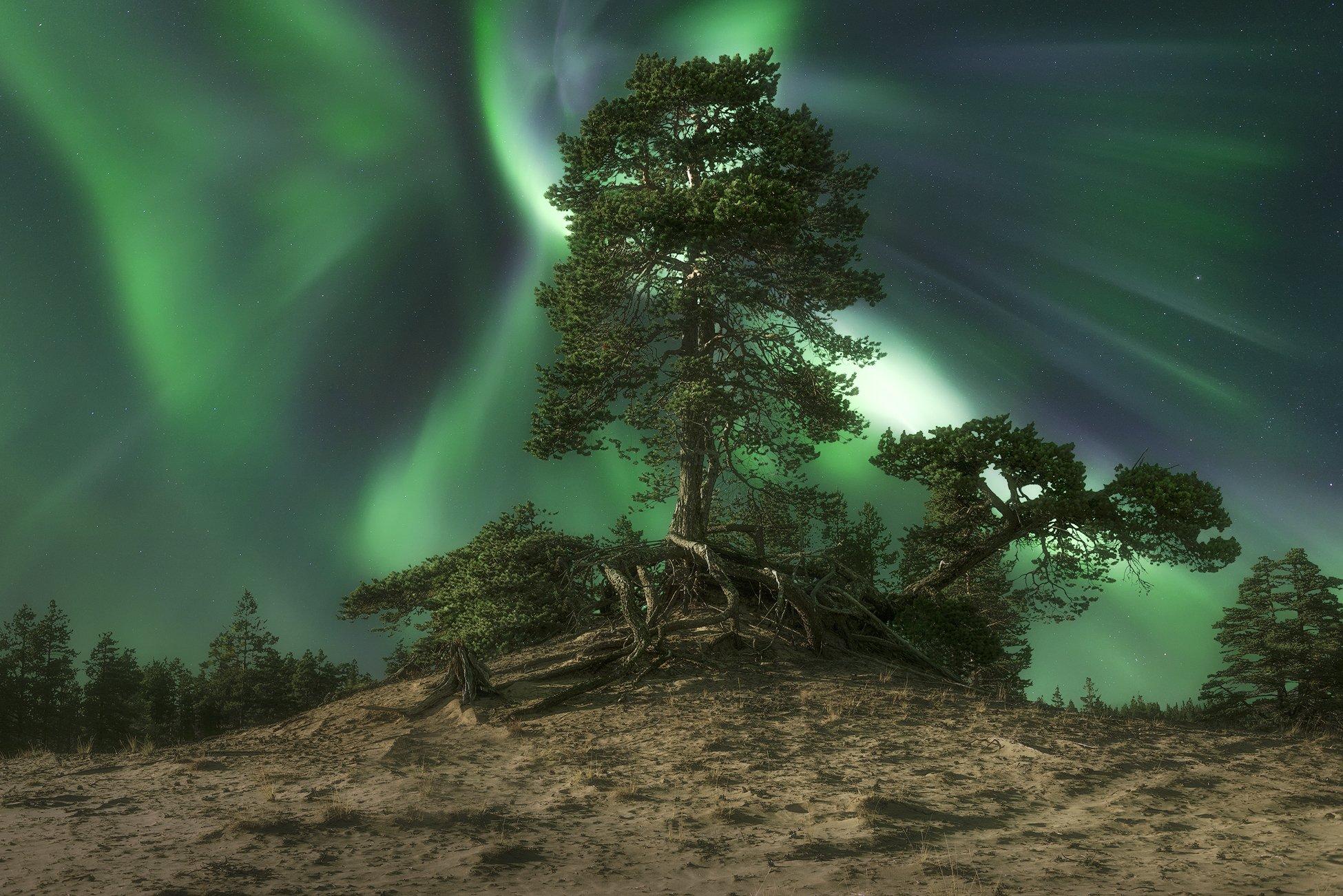 Северное сияние, Кольский полуостров, aurora Borealis, Анастасия Малых