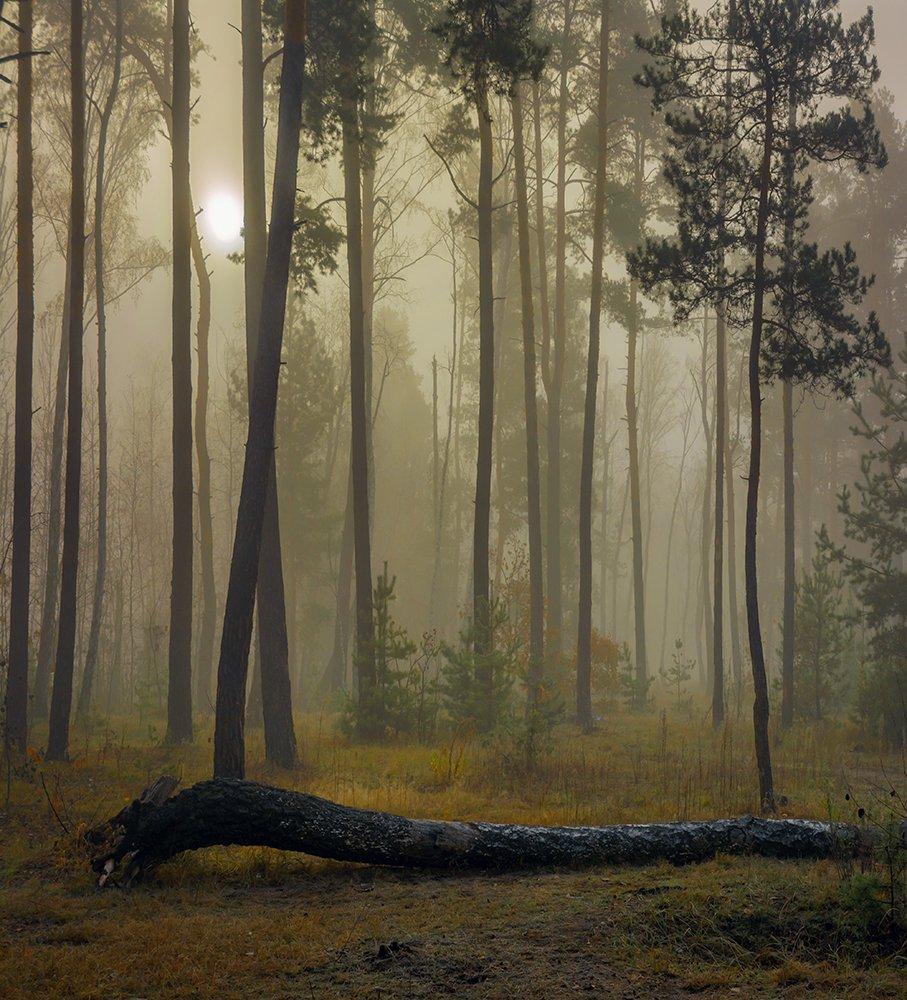 landscape, пейзаж,  лес,  деревья,  природа,     прогулка, осень,  туман, утро, сырость,, Шерман Михаил