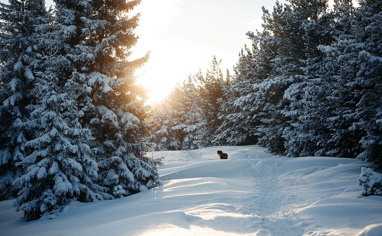 россия, зима, январь, снег, урал, лес, природа, собака, солнце, Евгений Толкачёв