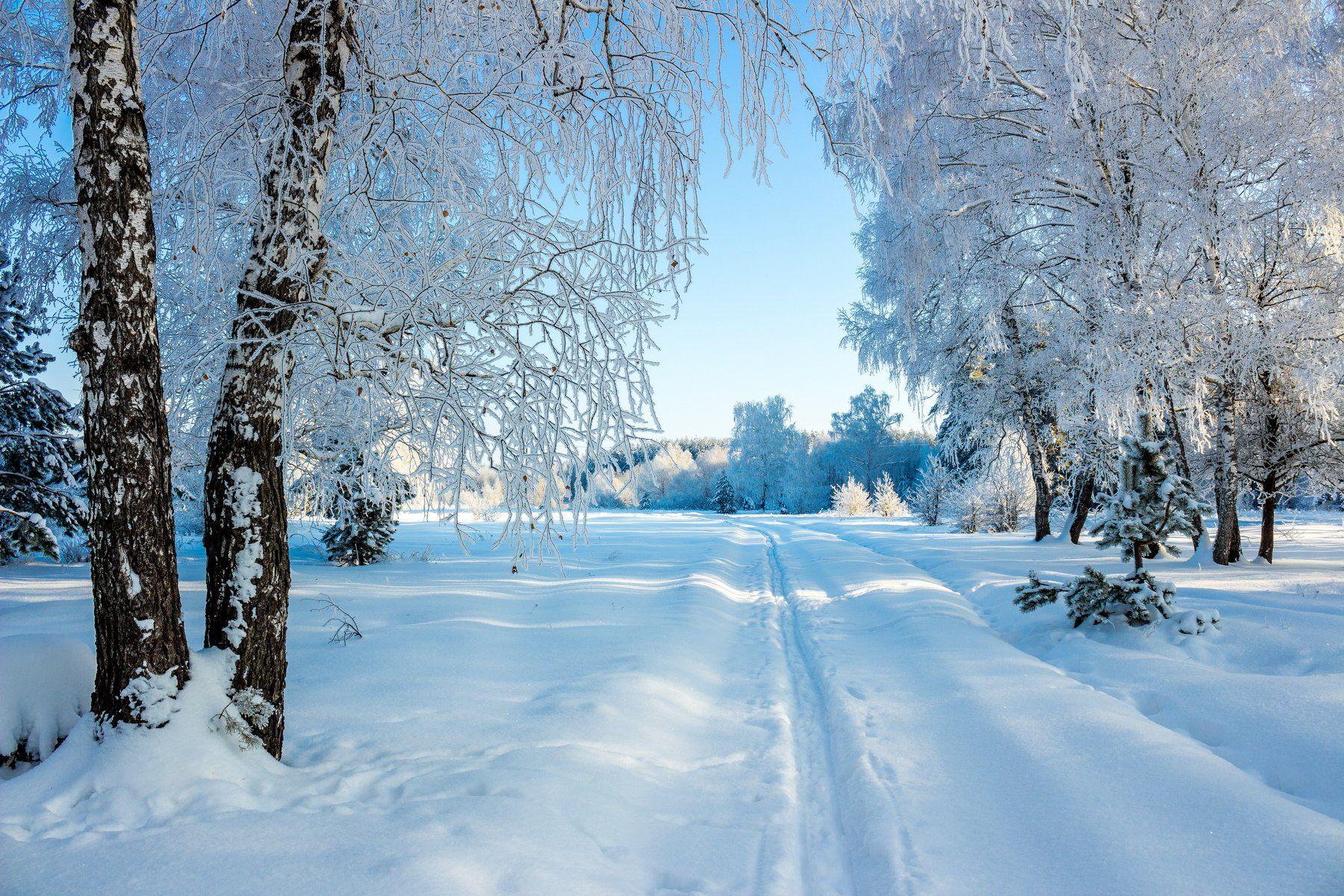 снег, лыжня, лес, иней, зима, заповедник, берёзы, Руслан Востриков