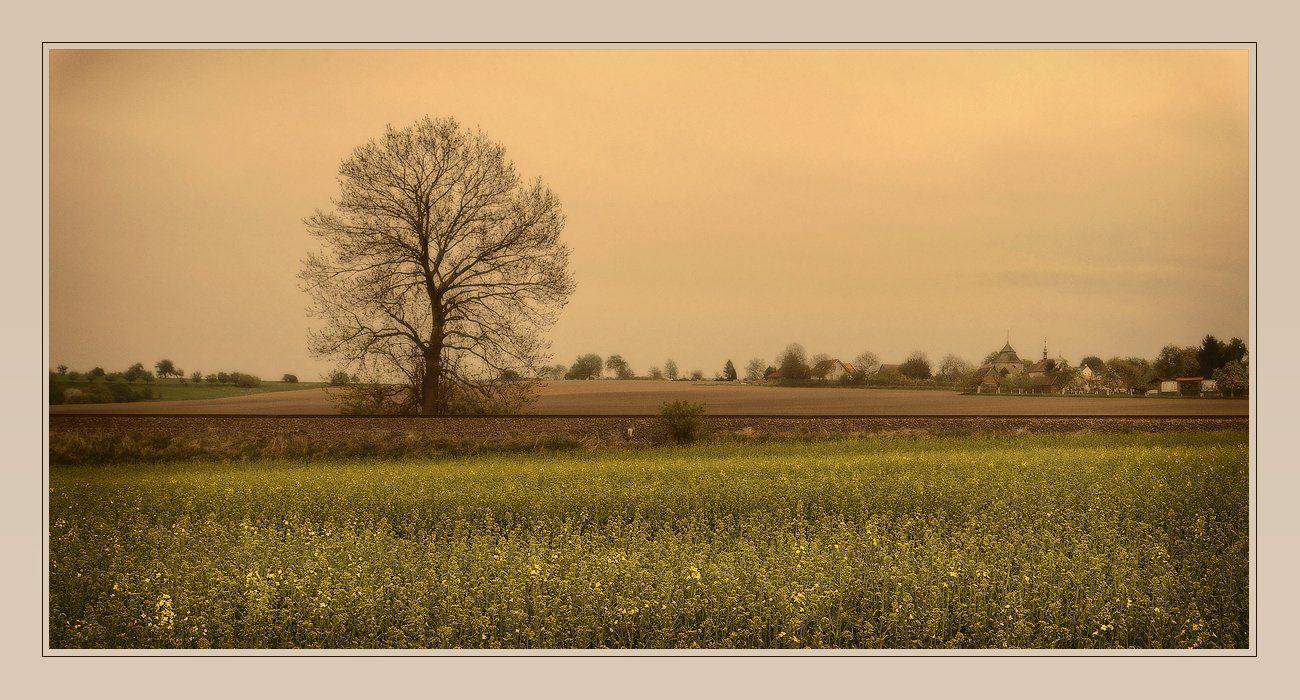 небо, пейзаж, поля, дерево, Oleg Dmitriev