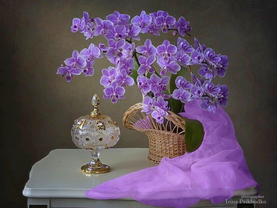 Происходящая от Бога! Натюрморты с орхидеями Ирины Приходько