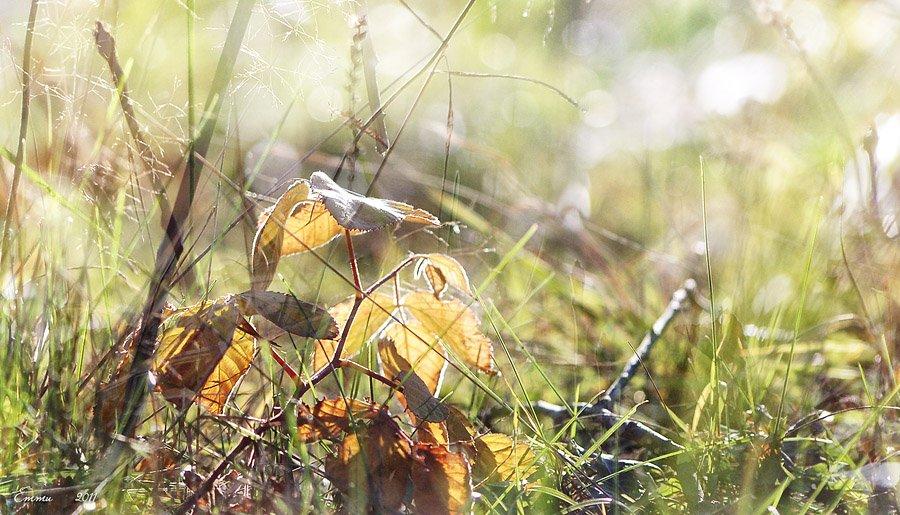 осень, лес, природа, етти