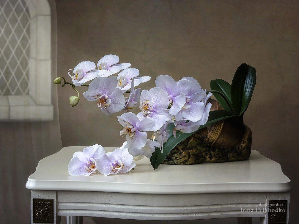 Трепет Нежных Орхидей