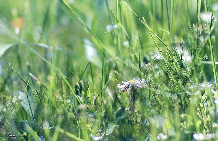 трава, природа, етти