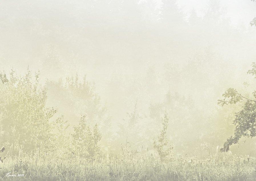 утро, природа, туман, етти