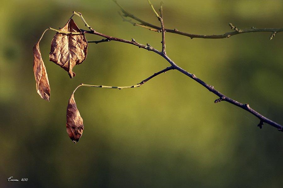 листья, природа, ветка, етти