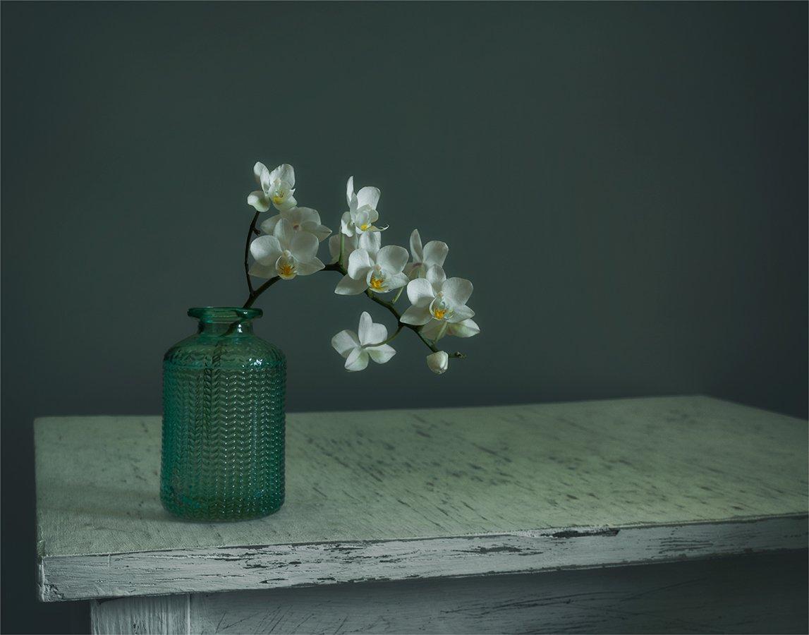 still life, натюрморт, природа, цветы, орхидея, ветка, минимализм, цвести,, Шерман Михаил