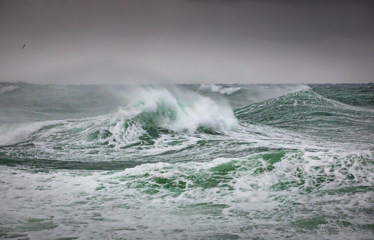 море,крым,пейзаж,шторм,россия,фототур,волна,волны,природа,севастополь, Elena Pakhalyuk