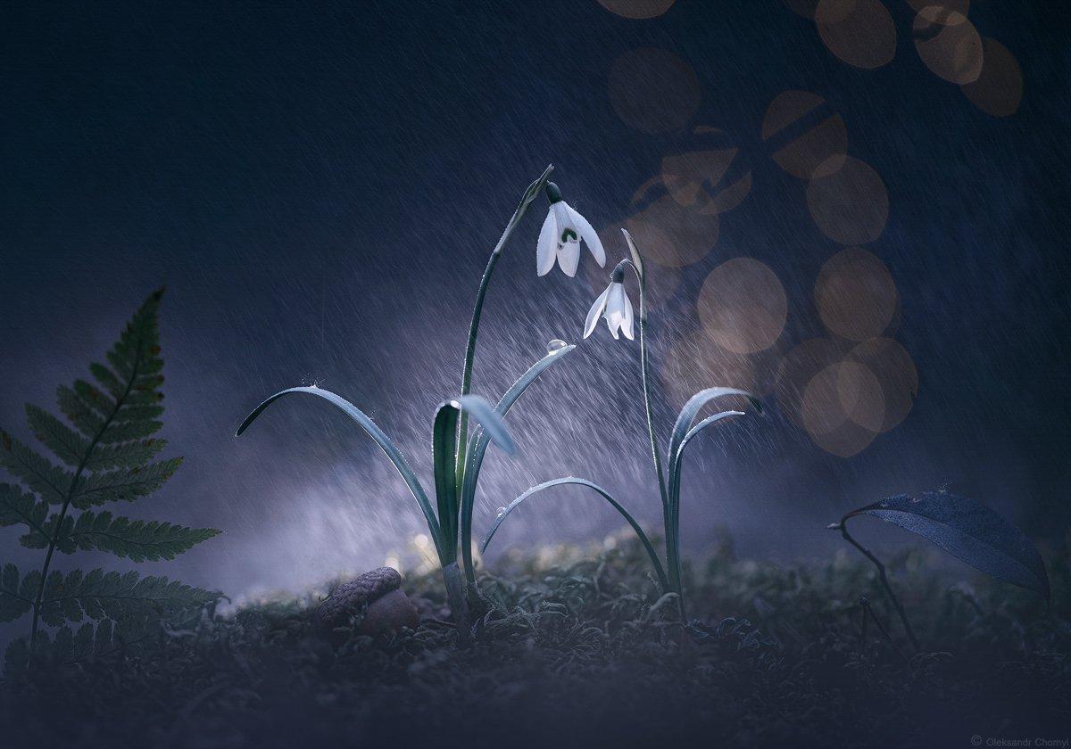 украина, коростышев, природа, весна, лес, март, дождь, подснежники, цветы, макро, макро мир, макро красота, макро истории, тишина, гармония, любовь, жизнь, счастье, двое, он и она, волшебство, сказка, мечта, синий, фон, капли, брызги, фотограф, чорный, Александр Чорный