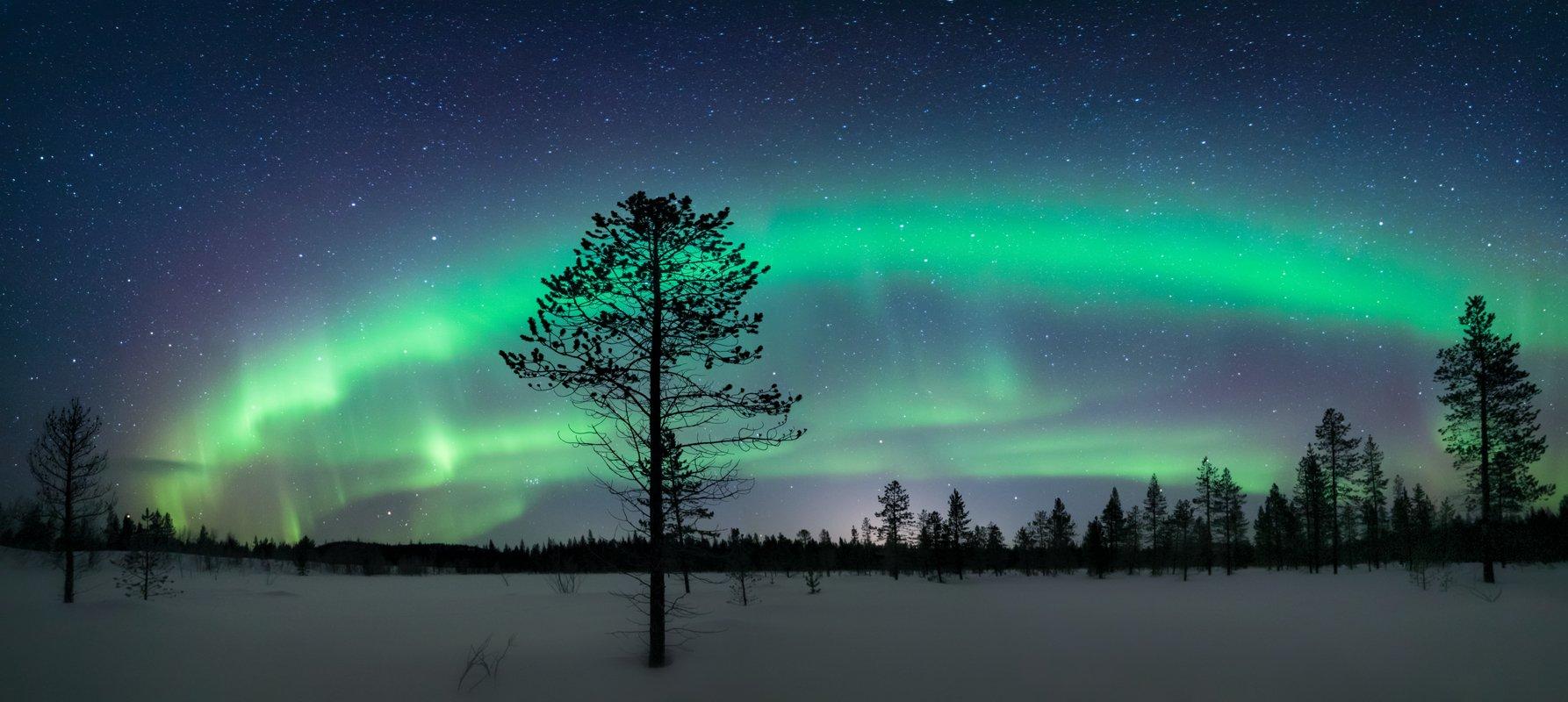 северное сияние,север,териберка,мурманск,ночь,звезды,лес,снег,зима,аврора,фототур,россия, Elena Pakhalyuk